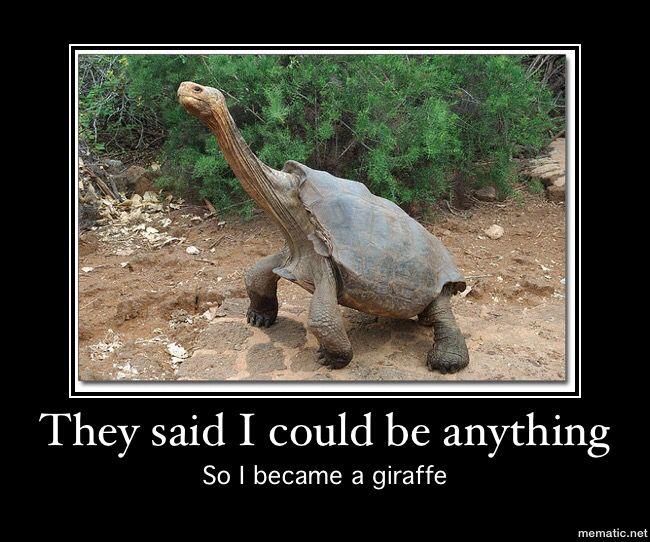 4310647f2682e14022ab1de5986704a0 turtle meme ) humor pinterest turtle meme, turtle and meme