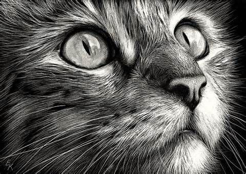 Beautiful Cat Face Drawing - Bing Images