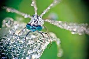 insectes photos - Ecosia