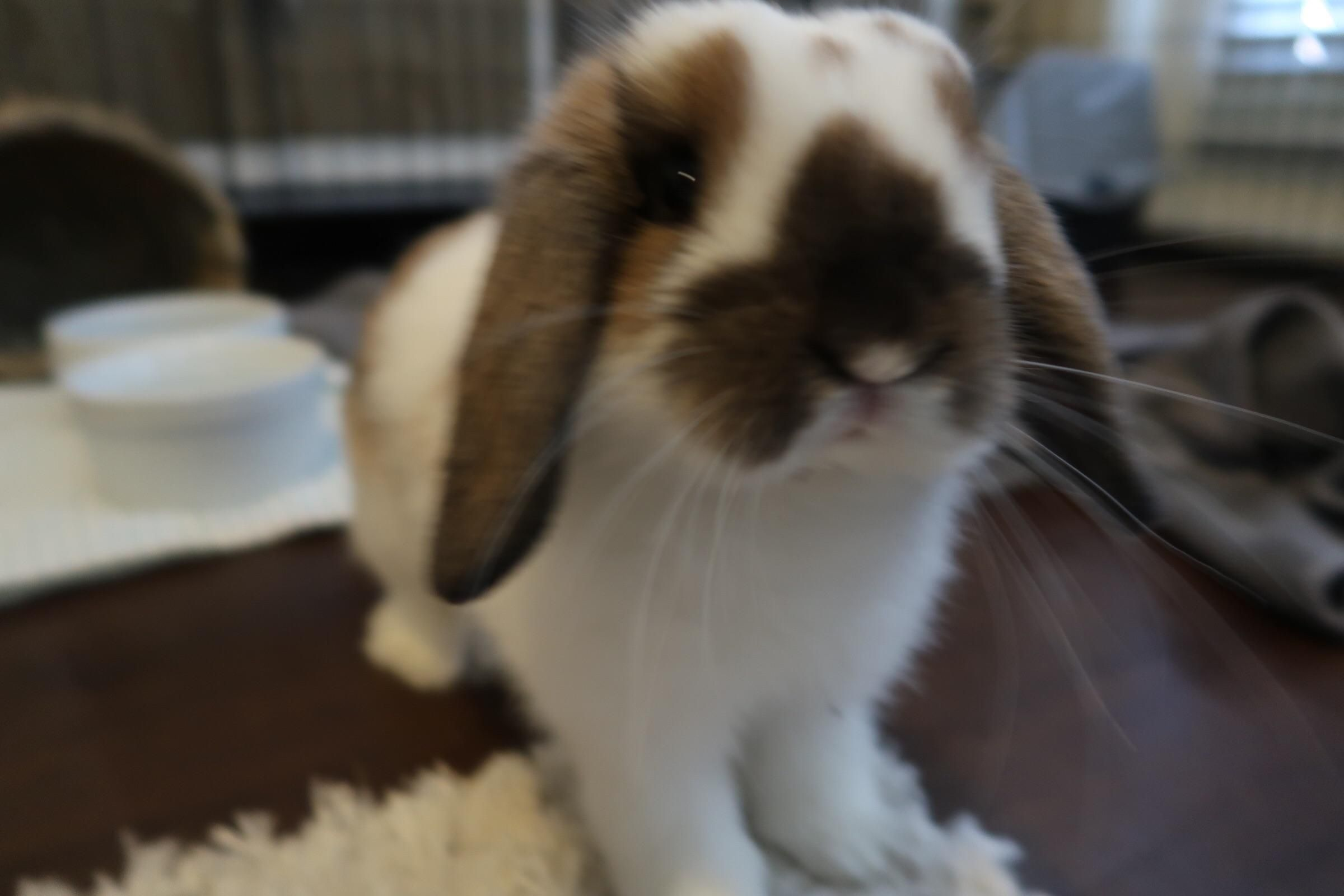 Things You Need To Know Before Buying A Rabbit Buy A Rabbit Rabbit Cute Bunny