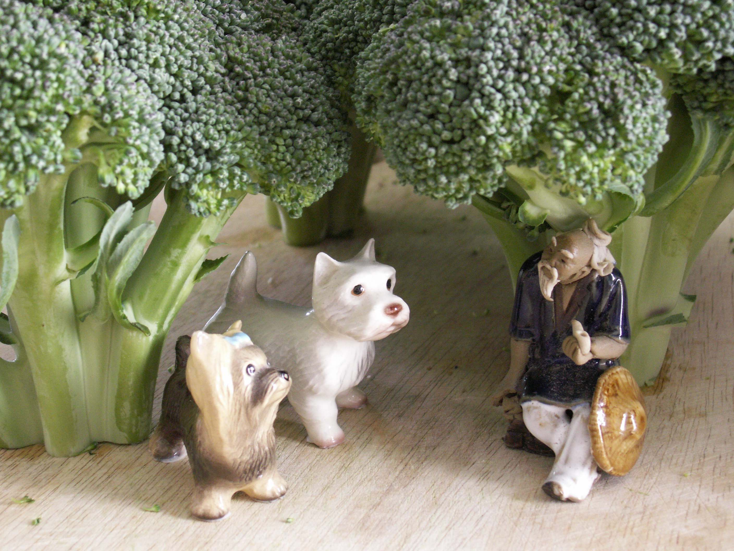 Maggie & Toby find wisdom in the broccoli forest.