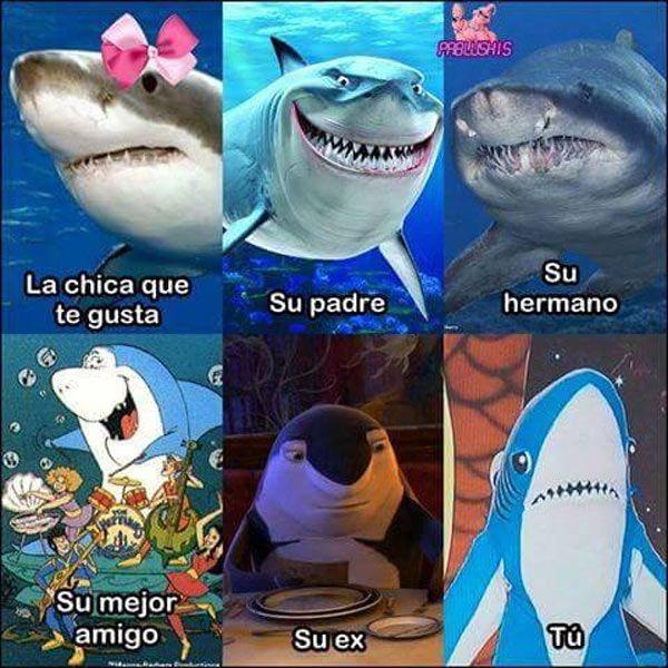 Tu Vida De Tiburon Spanish Memes Memes Humor