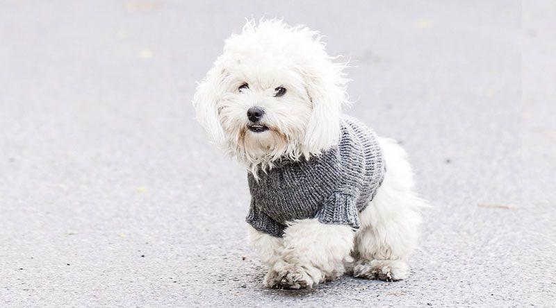 Sticka hundtröja | Hundtröja, Hundar, Hundkläder
