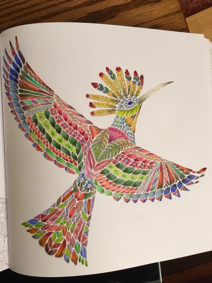 Millie Marotta Beautiful Birds And Treetop Treasures Coloring Book