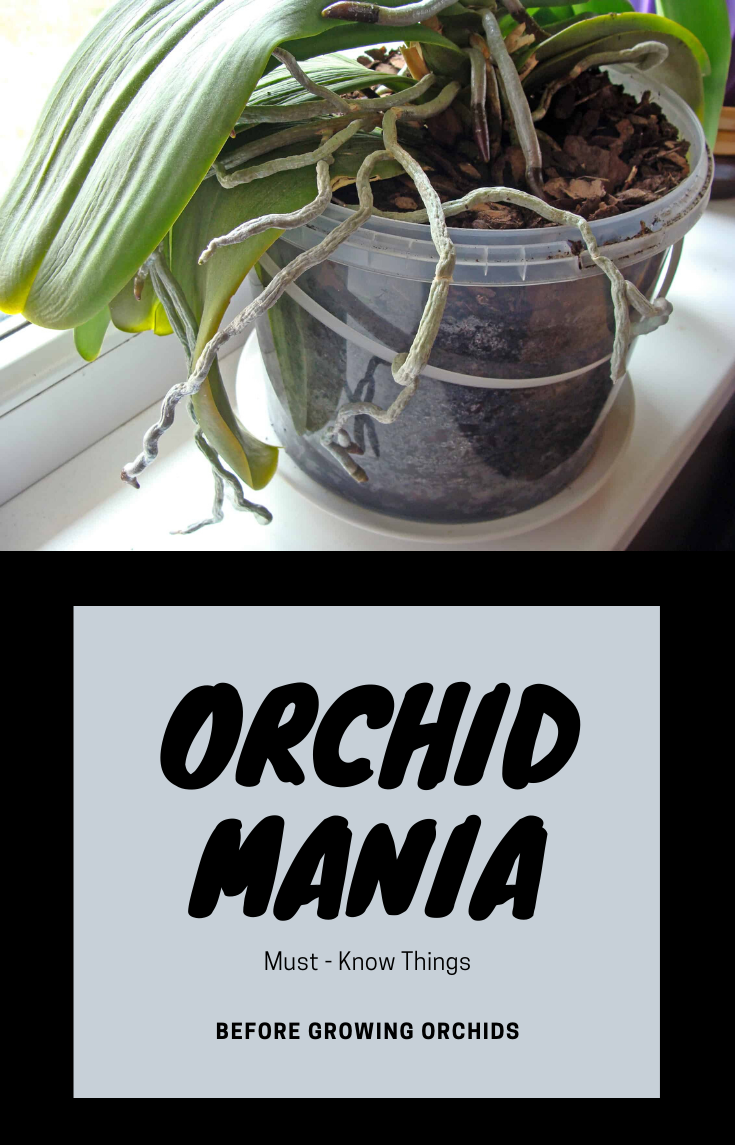 Photo of Orchid Mania: Must-Know Things Before Growing Orchids – GardenTipz.com