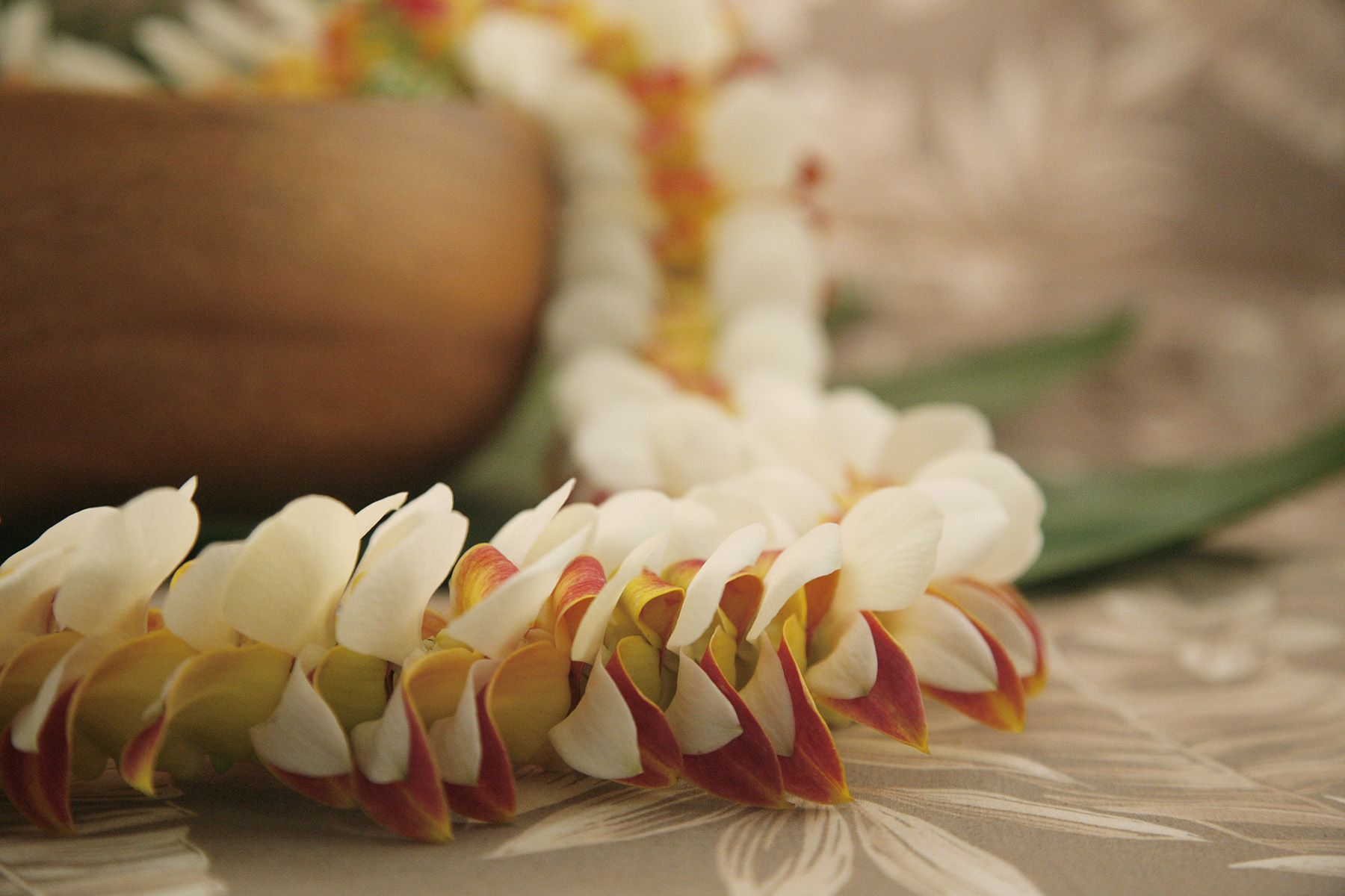 The soft tones of the napili orchid lei speak volumes its white the soft tones of the napili orchid lei speak volumes its white orchid petals mixed izmirmasajfo