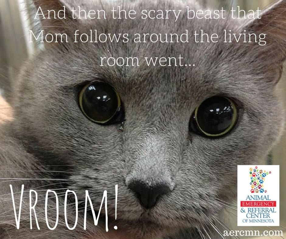 This Poor Kitty Got Scared By The Vacuum Pets Cats Scaredcats Animals Animalmemes Catmemes Aerc Minnesotaemergencyvet Sain Pet Owner Humor Animals Emergency Vet Animal Memes