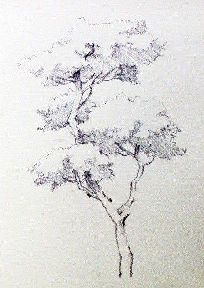 Pin Von Sylvie Eichler Auf Sketch Natur Zeichnen Baume Zeichnen