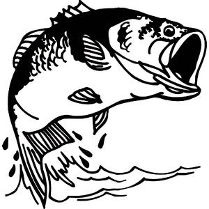 Sketch Of Bass Fish Coloring Pages