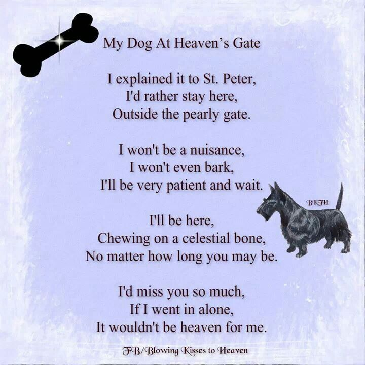 My dog prayer | New Year Day | Dog passed away, Dog heaven, Dogs