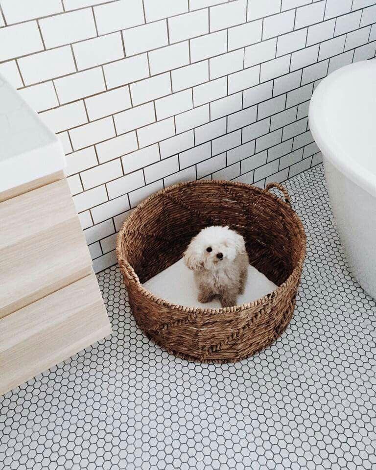 Le plus beau chien du monde! #marilou