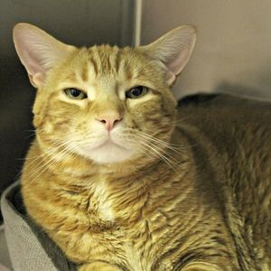 PANCAKES: http://quincyanimalshelter.org/Adopt_a_Cat_7AJJ.html