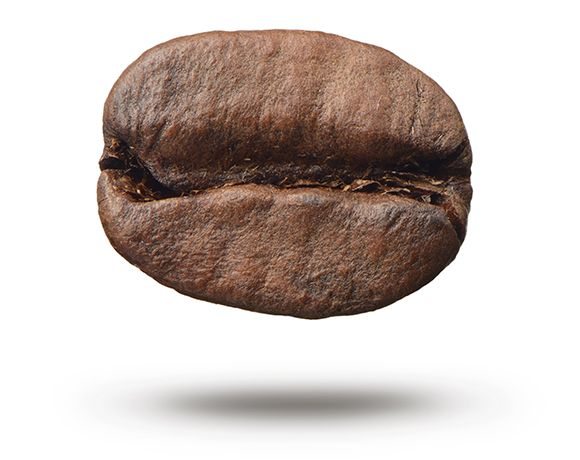 Coffee bean reference