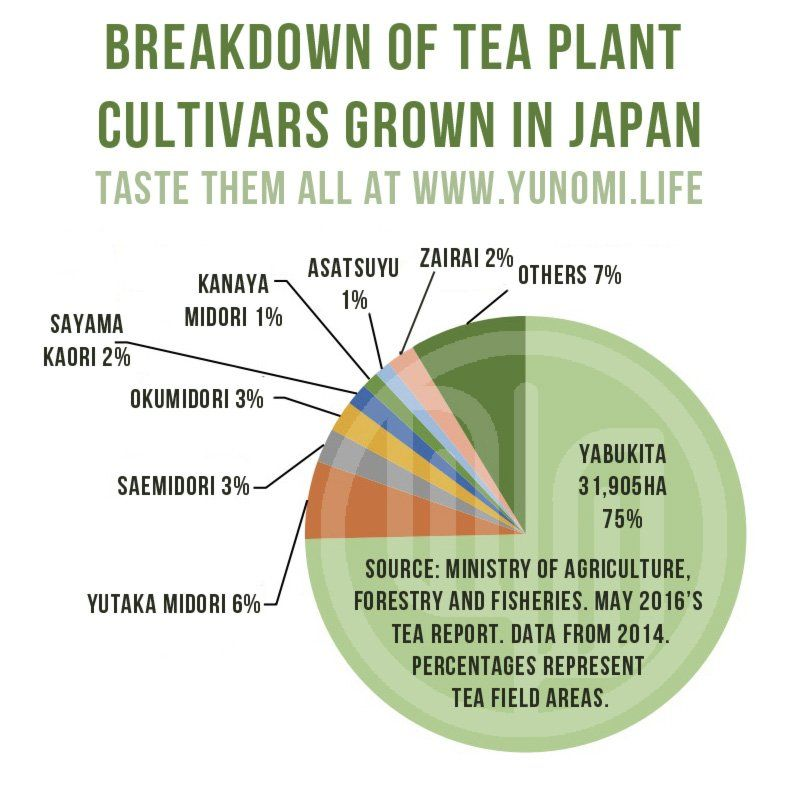 Breakdown of tea plant cultivars most commonly grown in Japan