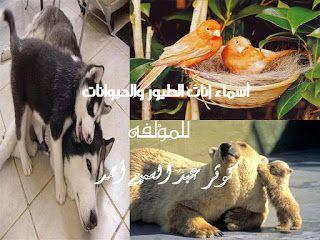 الكاتبة كوثر عبد السميع أحمد كتاب أسماء إناث الطيور والحيوانات ملون جميل جد ا ل Blog Posts