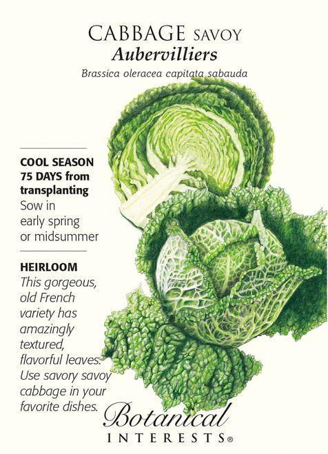 Aubervilliers Savoy Cabbage Seeds - 2 grams | HARVEST