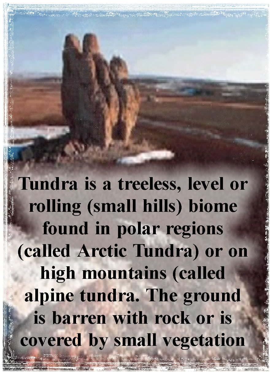 Tundra Description | biome on a world map | Arctic tundra