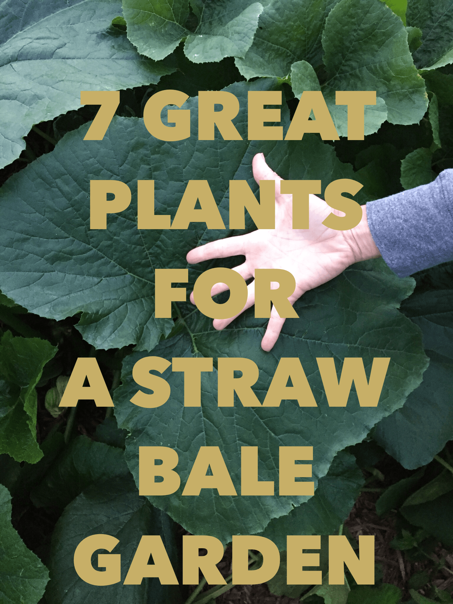 7 great plants for a straw bale garden from the garden to the table recipes for life straw for Best plants for straw bale gardening