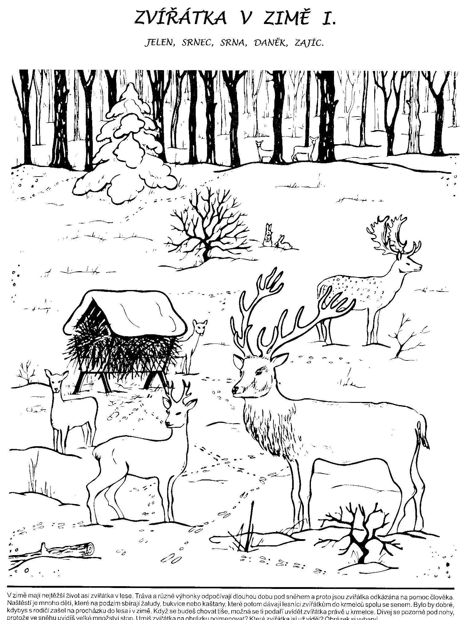 Pracovni Listy Zima Hledat Googlem Zviratka Z Lesa Pinterest