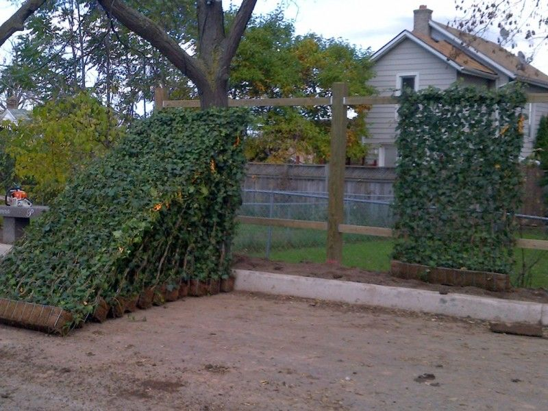 Instant Living Fence | garden | Pinterest | Living fence ...