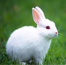 Related Image Rabbit Wallpaper Beautiful Rabbit Cute Animals