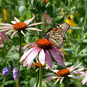 Cannot Wait To Enhance My Butterfly Garden! Nothing Gives Me That Quick  Rush Of Childhood Bliss Like A Butterfly Crossing My Path!