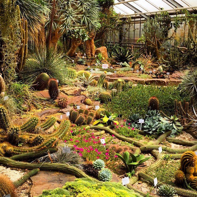 Bonns Botanischer Garten Ein Perfekter Platz Um Sich Vom Unialltag Zu Erholen Findet Ihr Nicht Auch Botanischergarten Bonn Plants Painting Art