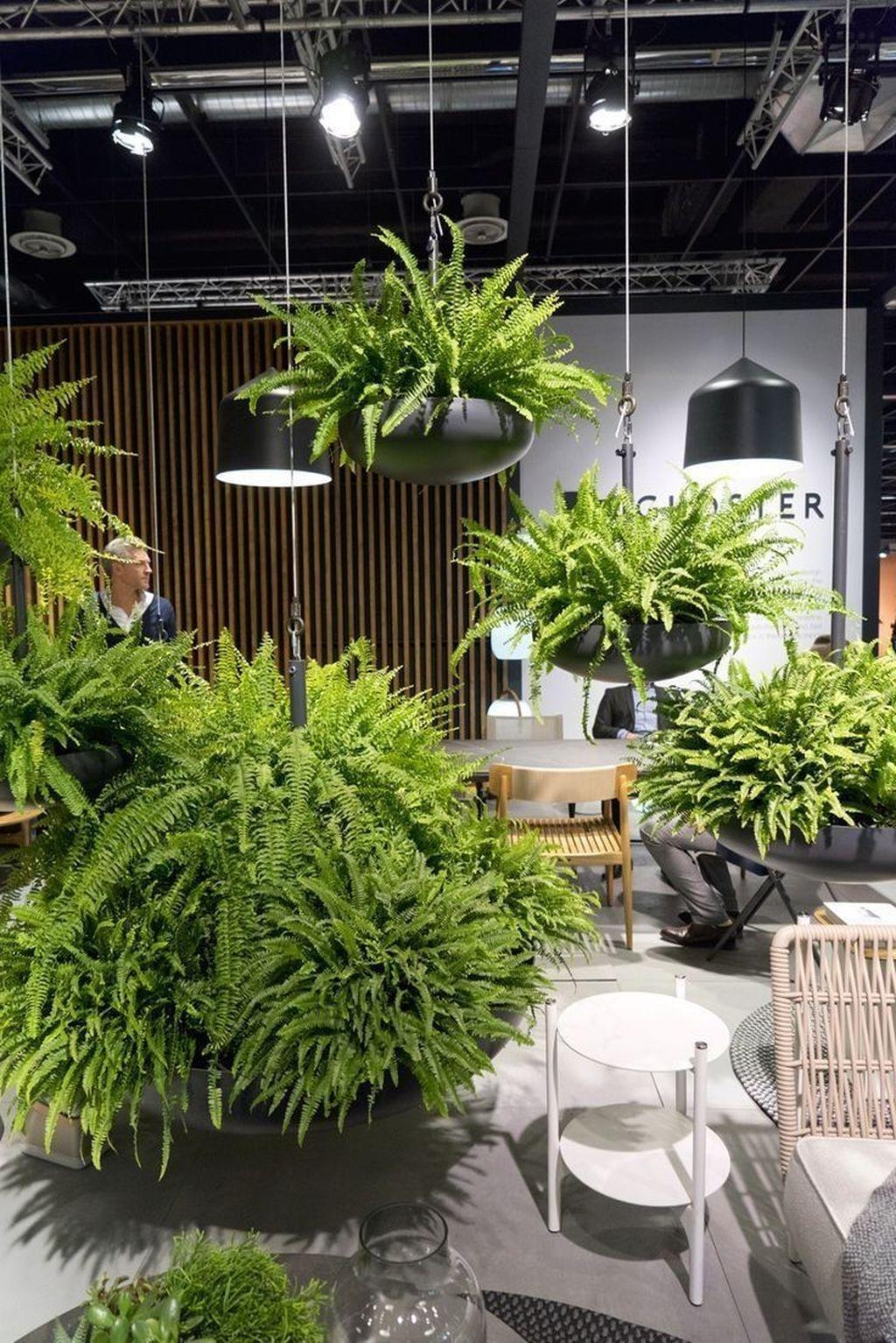 40 Dreamy Hanging Plants Ideas For Best Home Décor