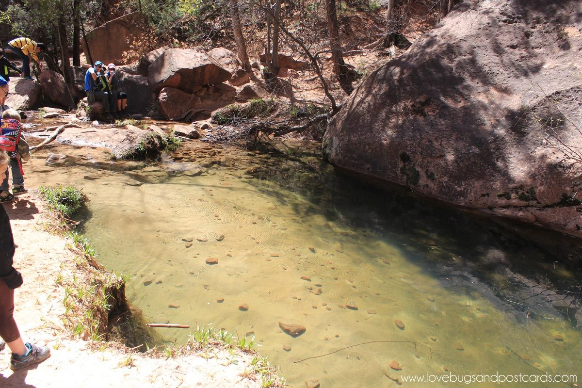 Emerald pool trails hike zion national park lovebugs and