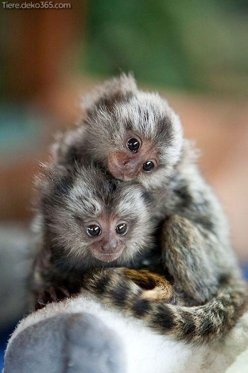 Entzuckende Kleine Tiere Die In Ihrer Handflache Halten In 2020