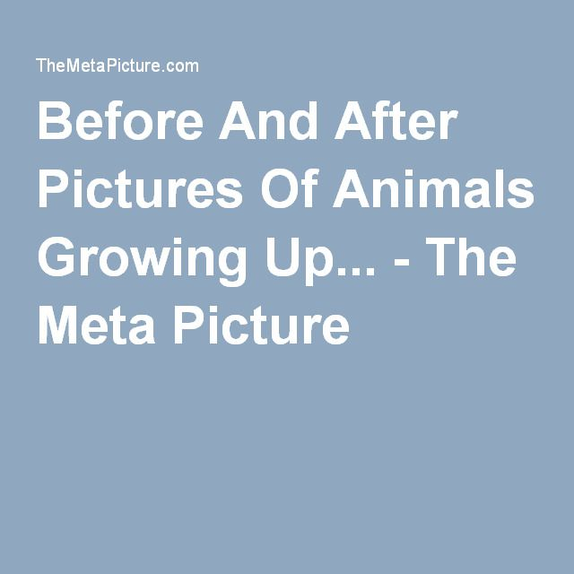 Before And After Pictures Of Animals Growing Up... - The Meta Picture