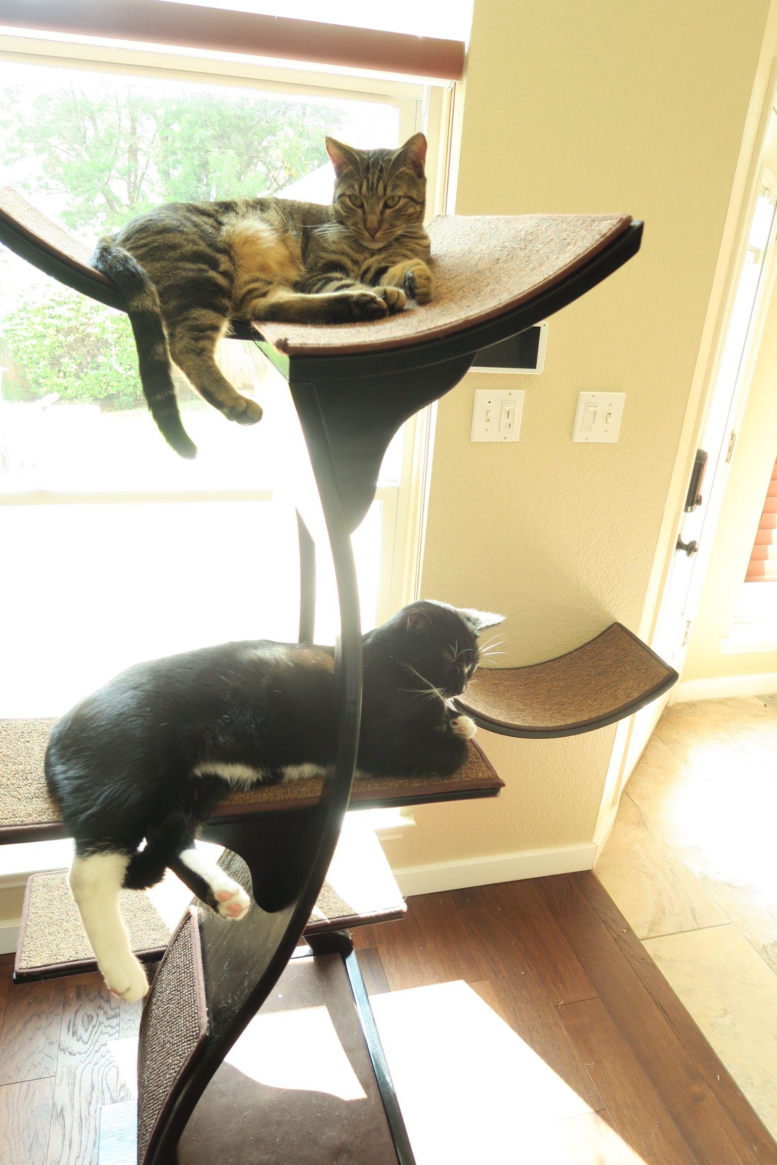 Modern luxury cat furniture by the refined feline