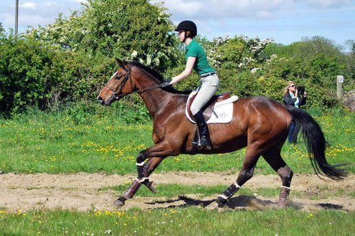 Sapphire-Irish Sport Horse