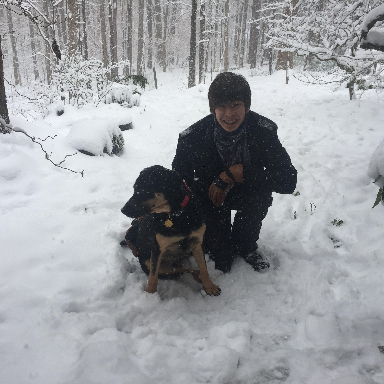 Labrottie Rottweiler Mix Puppy Training Dogs Animals Black