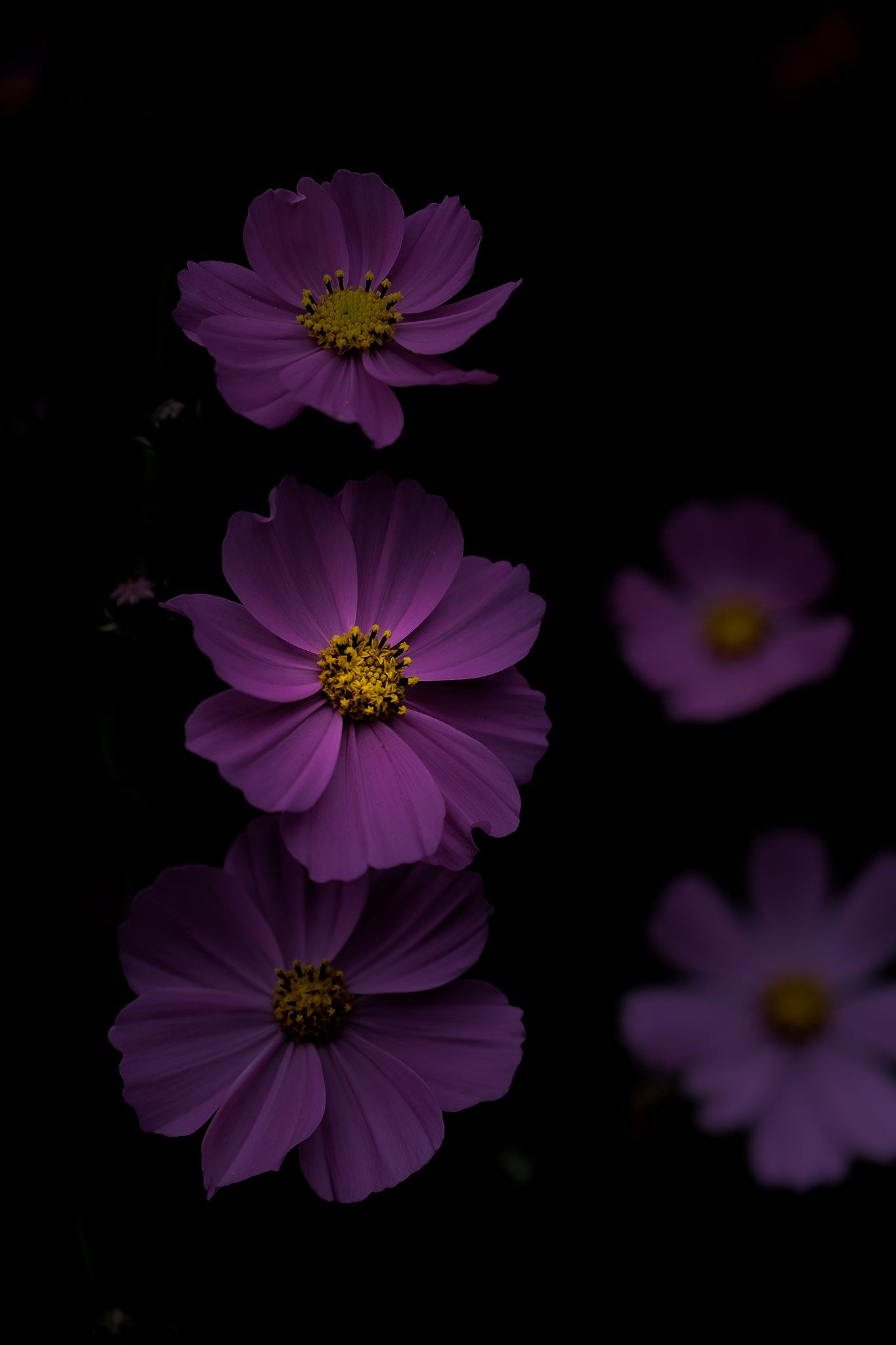Untitled Flowers Photography Wallpaper Purple Flowers Wallpaper Wallpaper Nature Flowers