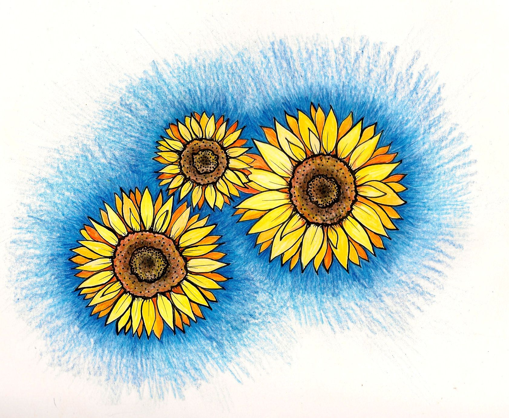 sunflowers colored pencil, original drawing
