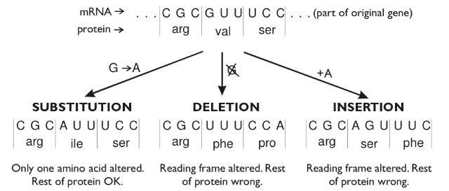 Mutations Inversion Is Not Shown Here Teaching Biology