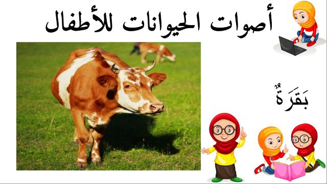 بقرة أسماء الحيوانات للأطفال وأصواتها Animals Cow