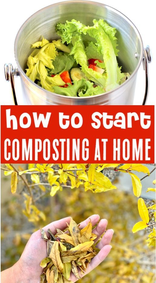 Composting for Beginners! {What to Put In Your Compost Bin ...