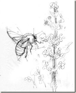 Explore Bee Sketch Flower Pencil Drawings And More