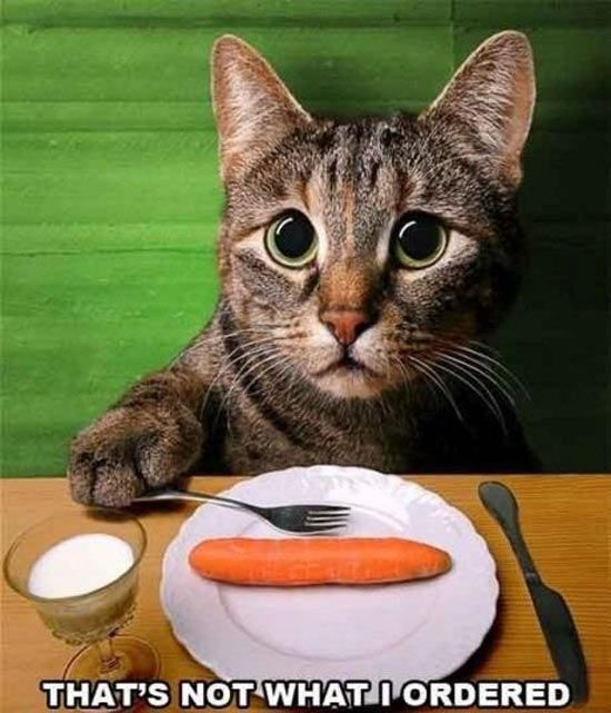 Cats Lunch Order Fails