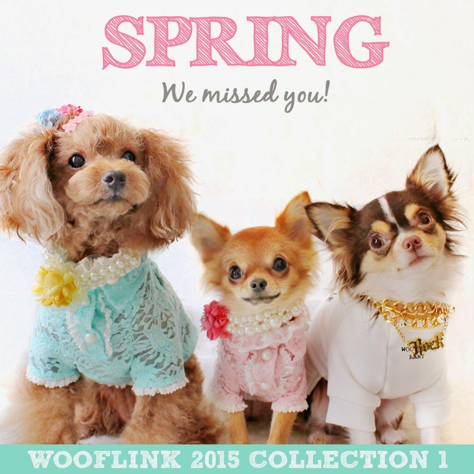 WOOFLINK - Hip designer dog clothes: WOOFLINK 2015 COLLECTION 1 IS HERE ♥