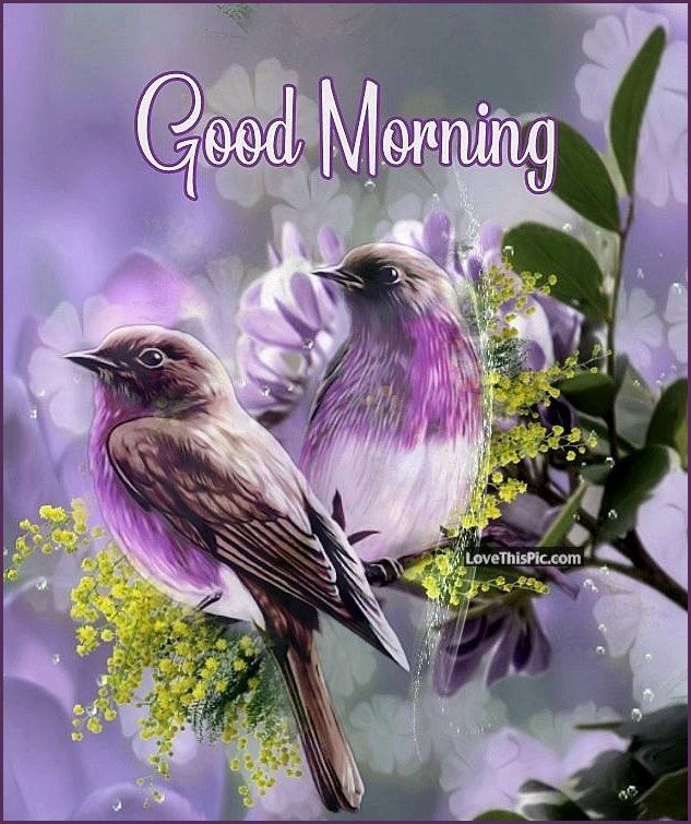 Purple Spring Good Morning Birds Spring Nature Birds Purple Beautiful Good Morning Quotes Sp Good Morning Happy Sunday Good Morning Flowers Good Morning Quotes