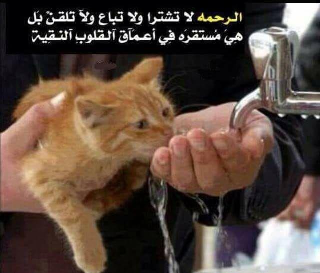 الرحمة لاتشترى ولاتباع ولا تلقن بل هي مستقرة في أعماق القلوب النقية Kindness To Animals Animals Crazy Cats