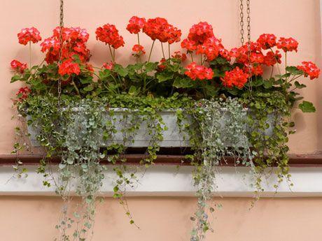 Flores Terraza 0 Decoracion De Unas Flores En Caja Flores