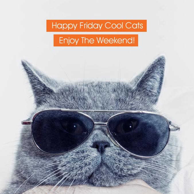 Happy Friday Cool Cats #TGIF #lolcats