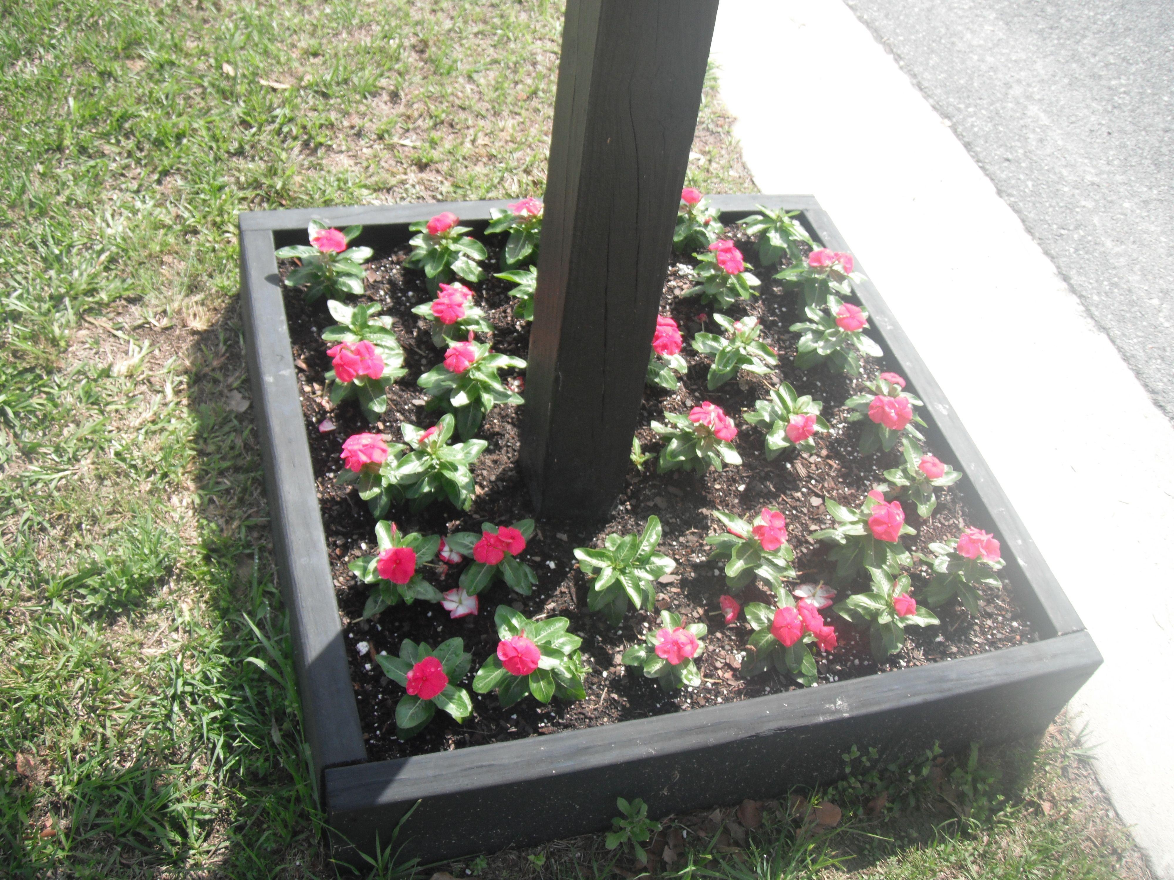 my flowers around the mailbox christy ♥