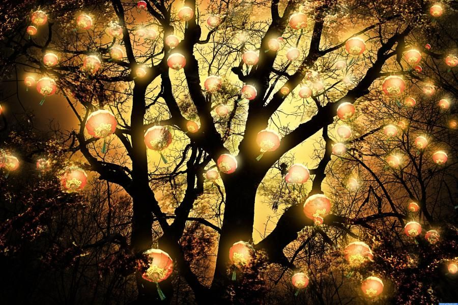 Tree with lanterns outdoor headlamps and lanterns pinterest tree with lanterns aloadofball Gallery