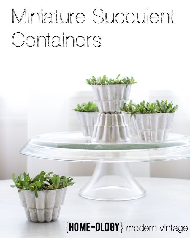 Things we Love - Miniature Gardens in Vintage Tins are a fun idea for gifts
