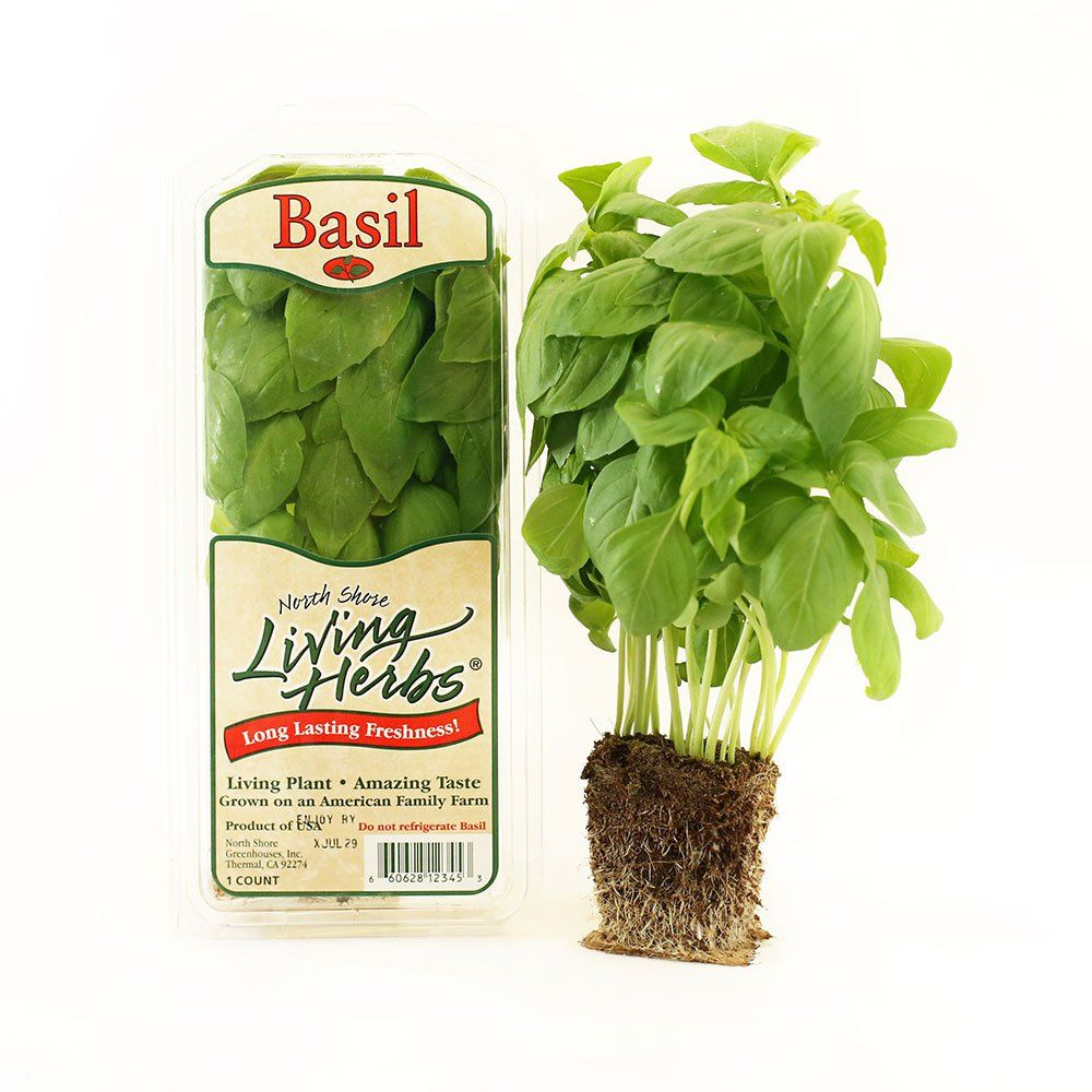 north shore living herbs basil fresh herb uses and cooking tips